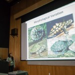 Caroline Dong and Evan McCartney-Melstad discuss phylogeny and divergence times of some (relatively) hyperdiverse turtles